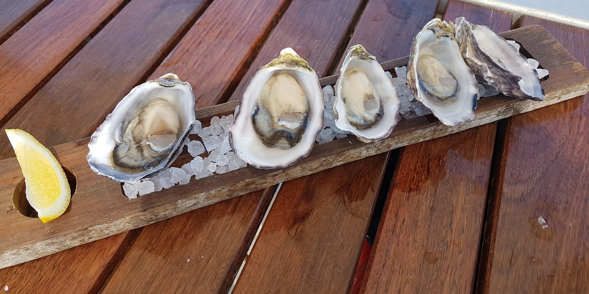 Aquaculture tour learning experience for local rock oyster project proponents